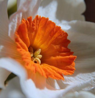 Znaczenie kwiatów.