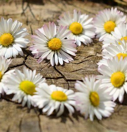 4 pory roku, inspiracje płynące z natury!