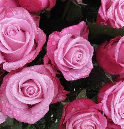 Pudrowe wesele, czyli motyw różu.