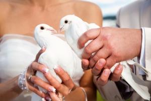 puszczasnie gołębi