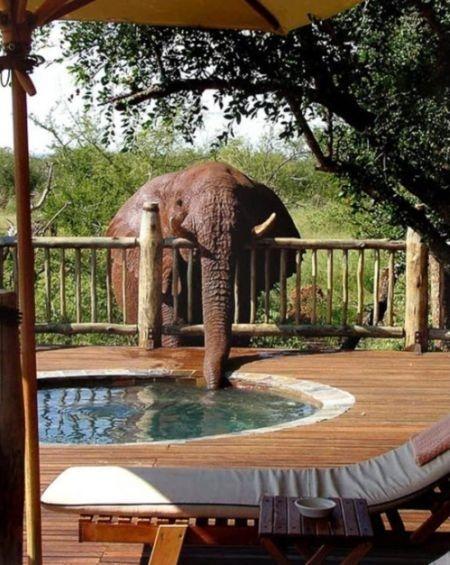 podróż poślubna Kenia